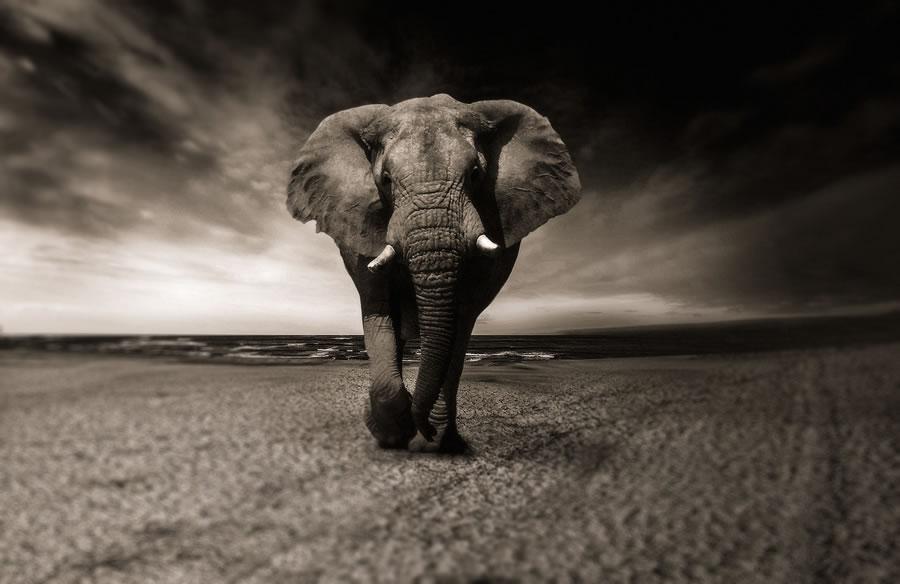 Amtsdeutsch Elefant